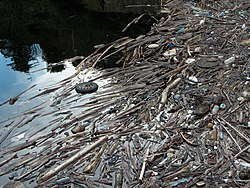Wood and garbage accumulated because of a dam