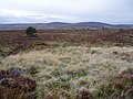 Dava Moor north of Tombain - geograph.org.uk - 1523791.jpg