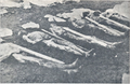 Dead inmates at the Rab concentration camp.png