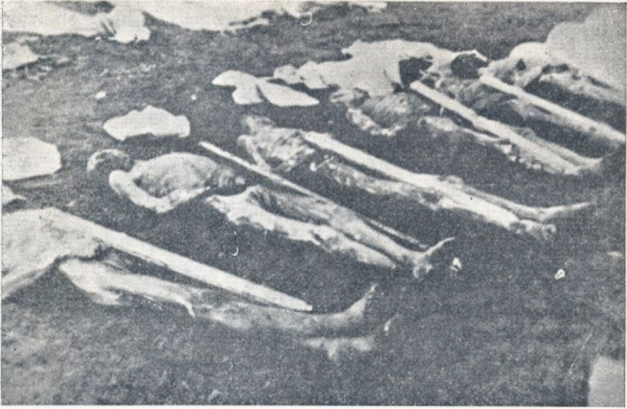 Dead inmates at the Rab concentration camp