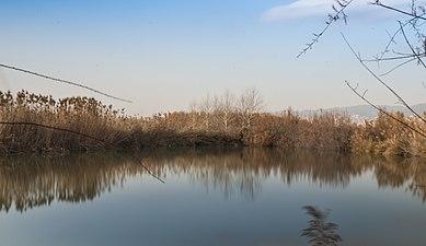 Delta del Llobregat 02.jpg