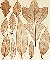 Denkschriften der Kaiserlichen Akademie der Wissenschaften, Mathematisch-Naturwissenschaftliche Classe (1883) (20844357382).jpg