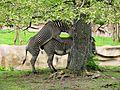 Detroit Zoo zebras mating (2501767179).jpg