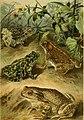 Deutschlands Amphibien und Reptilien. Eine Beschreibung und Schilderung sämmtlicher in Deutschland und den angrenzenden Gebietan vrokommenden Lurche und Kreichthiere (1897) (20700486410).jpg