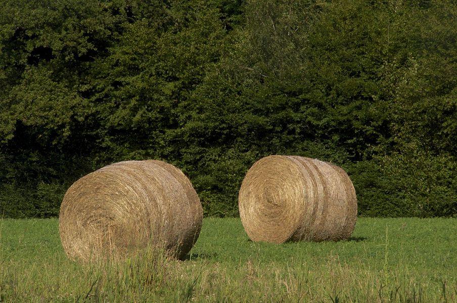 Deux bottes en lisière de forêt. La Celle-sur-Nièvre, Nièvre, France