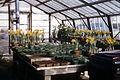 Dicksons Florist greenhouse beds 018.jpg