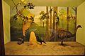 Diorama - Birds of South America - Zoological Gallery - Indian Museum - Kolkata 2014-04-04 4391.JPG