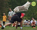 Dog disc.jpg