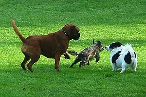 "Dogs doing what they do best. ""You chase ..."