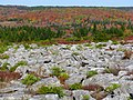 Dolly-sods-autumn-rocks - West Virginia - ForestWander.jpg