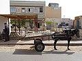 Donkey cart in Douz.jpg