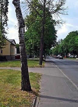 Dorfstraße in Berlin