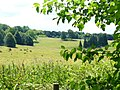 Downland by Cherkley Wood - geograph.org.uk - 1395103.jpg