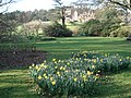 Dudmaston Hall Gardens - geograph.org.uk - 465560.jpg