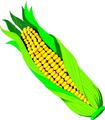 Ear of corn.png