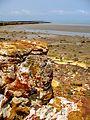 East Point Reserve, Darwin, Australia (314891014).jpg