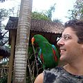 Eclectus roratus -Bali Bird Park -perching on shoulder-8a.jpg