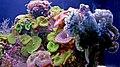 Eilat, Underwater scenery - panoramio.jpg