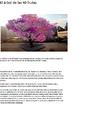 El árbol de las 40 frutas.png