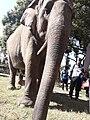 Elephant20171111 122136.jpg