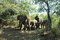 Elephant family trip.jpg
