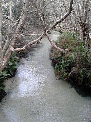 Fraser Coast Region - Eli Creek is the largest creek on the eastern beach of Fraser Island