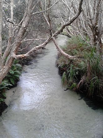 Fraser Coast Region - Eli Creek is the largest creek on the eastern beach of Fraser Island