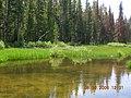 Elk Meadow stream 1.JPG