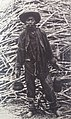 Enslaved Chinese coolie in Peru 1881.jpg