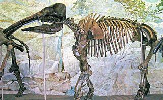 <i>Eubelodon</i> genus of mammals (fossil)