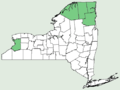 Euphrasia stricta NY-dist-map.png