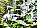 Everglades bird.jpg