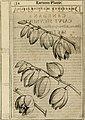 Exactissima descriptio rariorum quarundam plantarum, que continentur Rome in Horto Farnesiano (1625) (14774246384).jpg