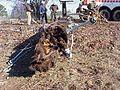 FEMA - 519 - Photograph by John Shea taken on 12-29-2000 in Arkansas.jpg