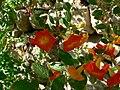 Fale - Giardini Botanici Hanbury in Ventimiglia - 679.jpg