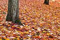 Fall (6282684630).jpg
