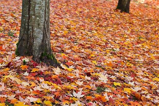 Fall (6282684630)