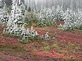 Fall colors with dusting of snow. (ec63f6c4343f4fa9960c82ae62e7a738).JPG