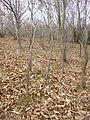 Fallen leaves mendizorrotz 01.JPG