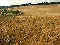 Farmland, East Ilsley - geograph.org.uk - 902345.jpg
