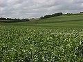 Farmland, Pitton - geograph.org.uk - 483637.jpg