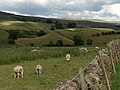 Farmland, Scale Houses - geograph.org.uk - 213010.jpg
