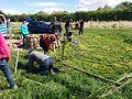 Fedge making at Whistle wood Common 2017.jpg