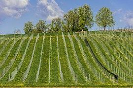Feldkirchen Briefelsdorf 55 Weingut Winzerei Trippel 20042016 3076.jpg