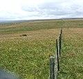 Fence across Caucabush Rigg - geograph.org.uk - 483617.jpg