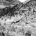 File-B&W negative of rock removal from Pine Creek road (Zion-Mt. Carmel Highway--State Route 9), blasting by road crew. -No positive (acc05ad73eb445f2a70166ed9830ca93).jpg