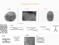 Fingerprint Types and Patterns.png