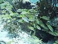 Fischschwarm0212.JPG
