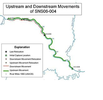GIS and aquatic science - Image: Fish Movements USGS