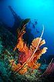 Flickr - JennyHuang - reef forests fantasy ^9.jpg